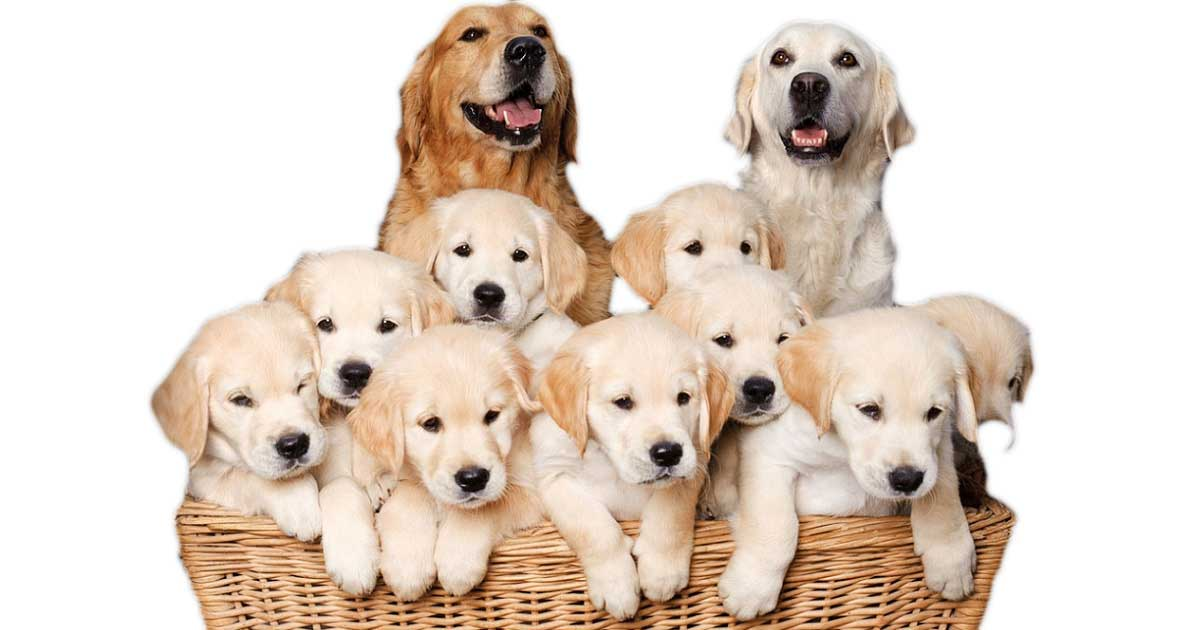 15 signs of a good dog breeder