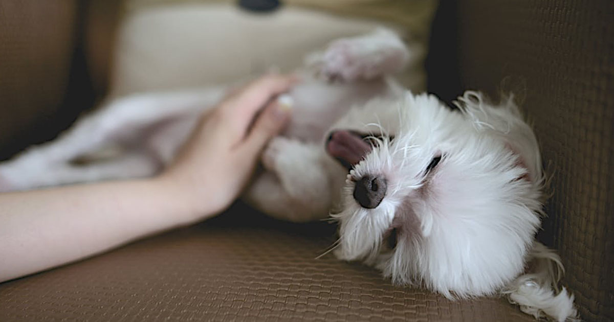 the essential guide for the first time pet sitter