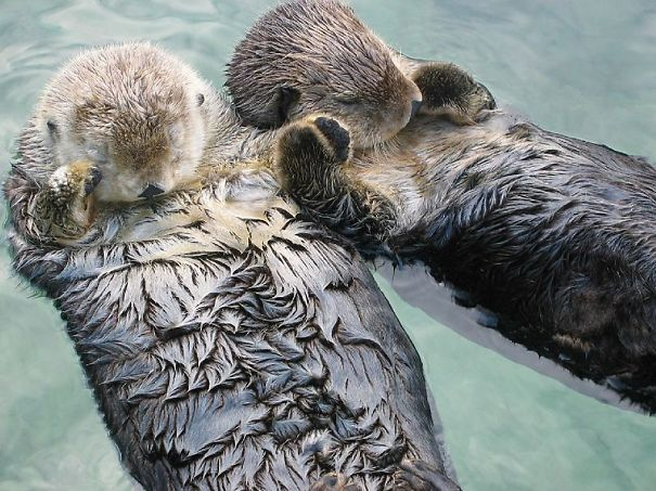 Happy otters