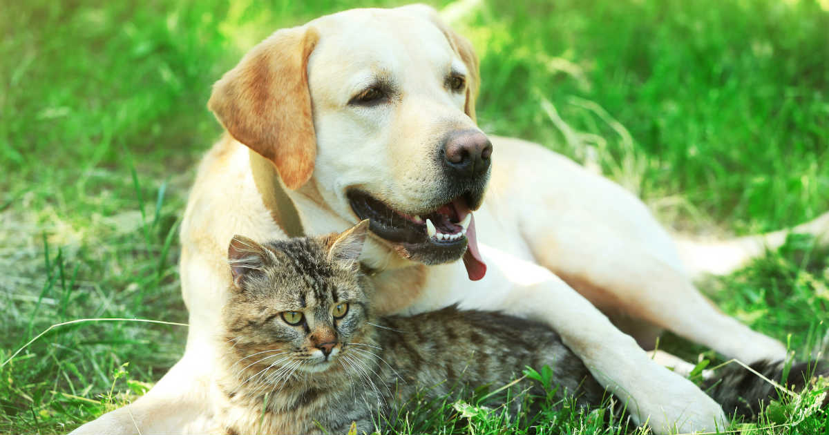 Benefits of spaying or neutering your pets