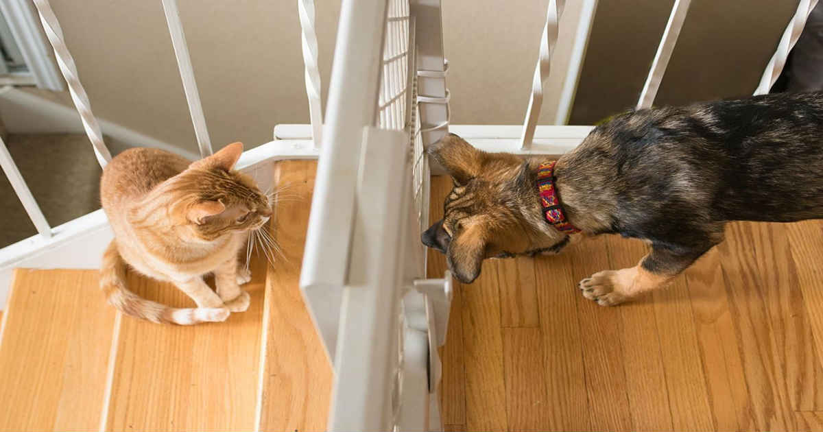 dog meet cat thru baby gate