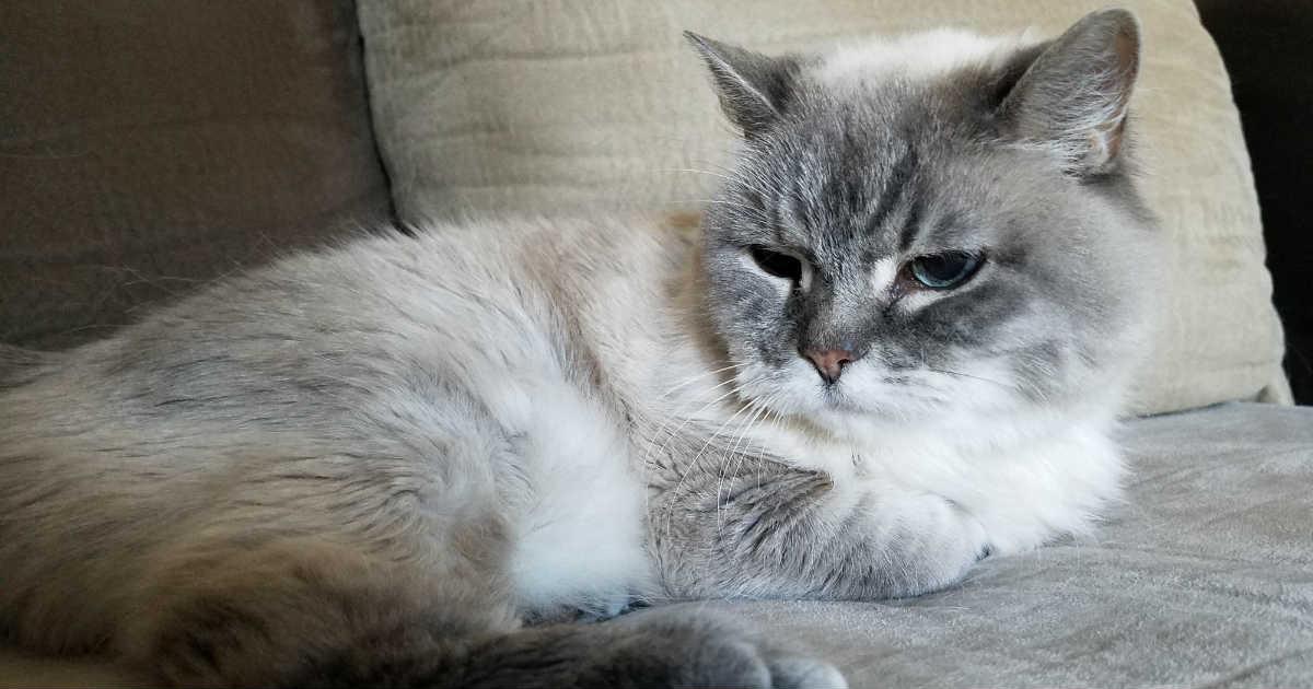 why do cat eyes glow